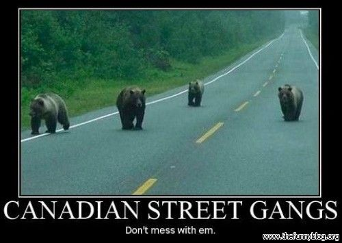 Funny Bear | Funny Bear | Funny Blog - Collection of funny pictures and memes