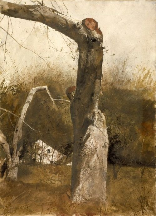 17 Best Images About Andrew Wyeth On Pinterest Groundhog