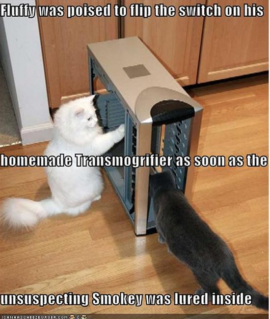 Two cats are fixing a computer