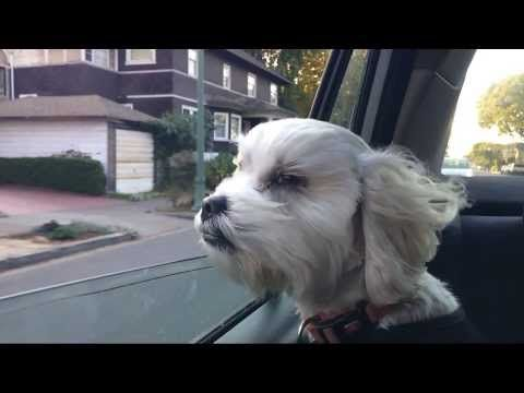 881 Best Images About Dog Videos On Pinterest Tiny