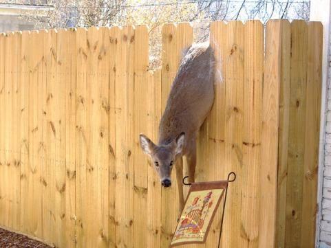 37 Best Images About Deer Fence On Pinterest Garden