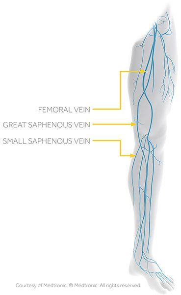 Great And Small Saphenous Veins | Vegas Valley Vein Institute