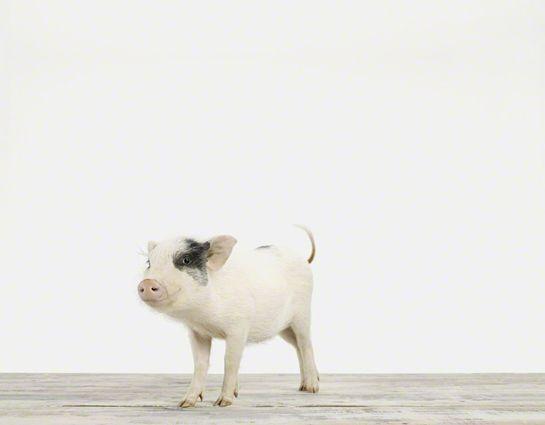 The Animal Print Shop via mrprintables blog