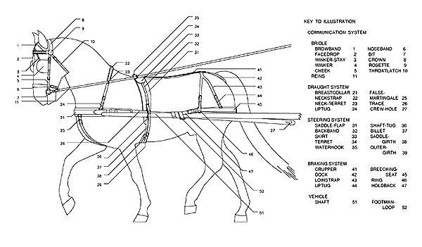 draft horse harness diagram for pinterest