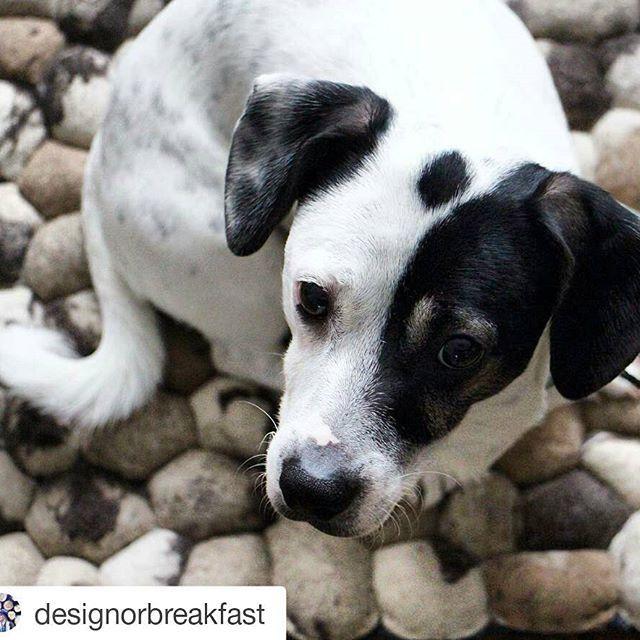 Un tappeto di pietre ha un look proprio naturale e come tale attira l'attenzione in casa. Anche da parte dei vostri animali domestici. Scoprite di più sui nostri tappeti di pietre qui: http://www.sukhi.it/fare-tappeti-di-lana-and-feltro