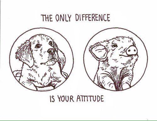 love all animals #vegan