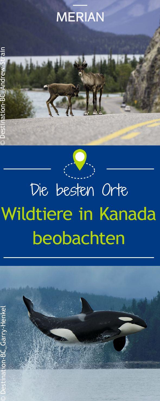 Wilde Tiere in Kanada beobachten – Katrin Antussak