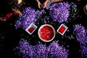 Saffron spice comes from the red stigmas of purple crocus flowers.