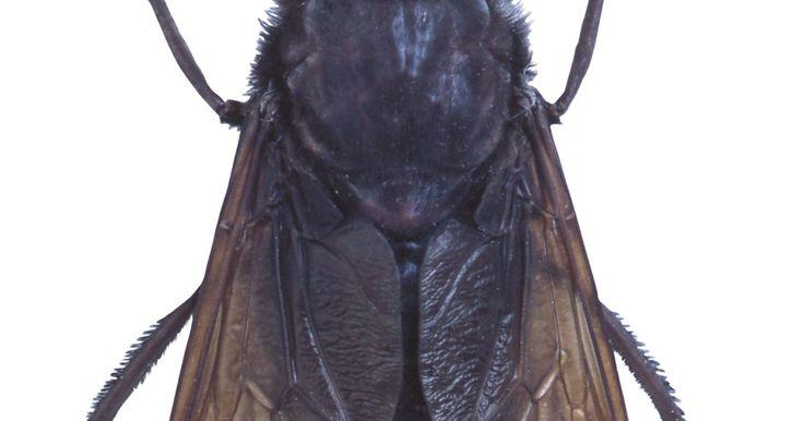 Tipos de pequeños insectos voladores negros. Durante los meses en los que hay clima cálido, a muchos de los insectos pequeños voladores les gusta revolotear tanto dentro como fuera del hogar. Algunas pestes no son preocupantes y son fáciles de exterminar. Otras criaturas voladoras pueden ser más amenazantes debido a sus mordeduras o picaduras. Familiarizarte con algunos de los tipos más ...