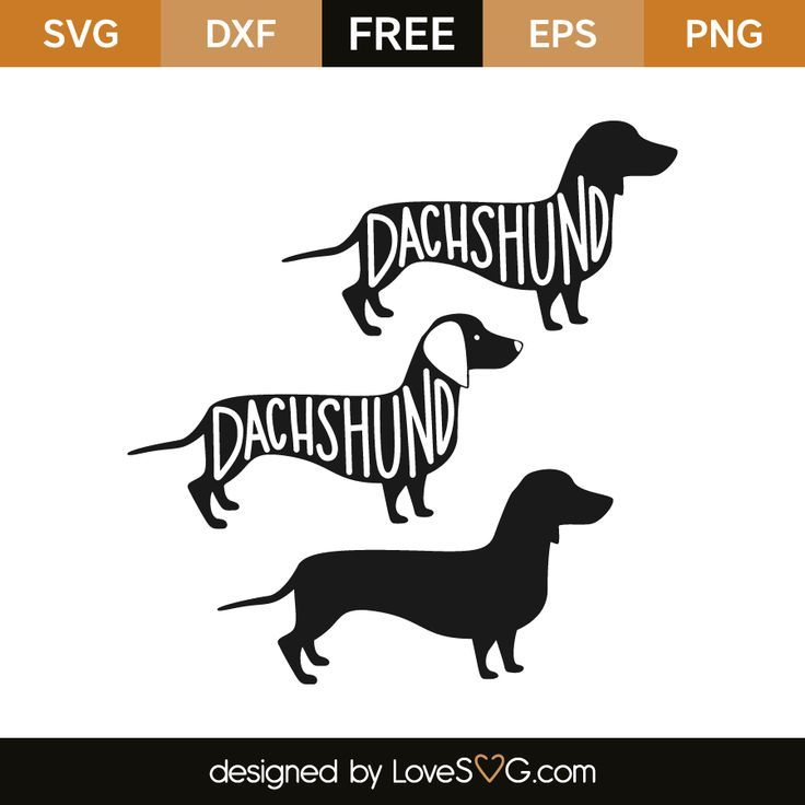 Download Dachshund | Lovesvg.com in 2020 | Cricut, Free svg, Svg ...