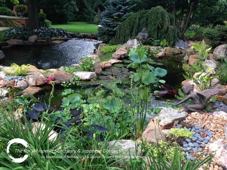 1000 images about zen living by design japanese healing for Koi fish pond lotus
