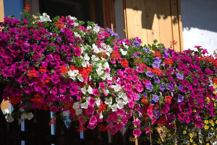 25+ migliori idee sulle tendenze Piante Da Balcone su Pinterest  Piante per cortile, Giardino ...