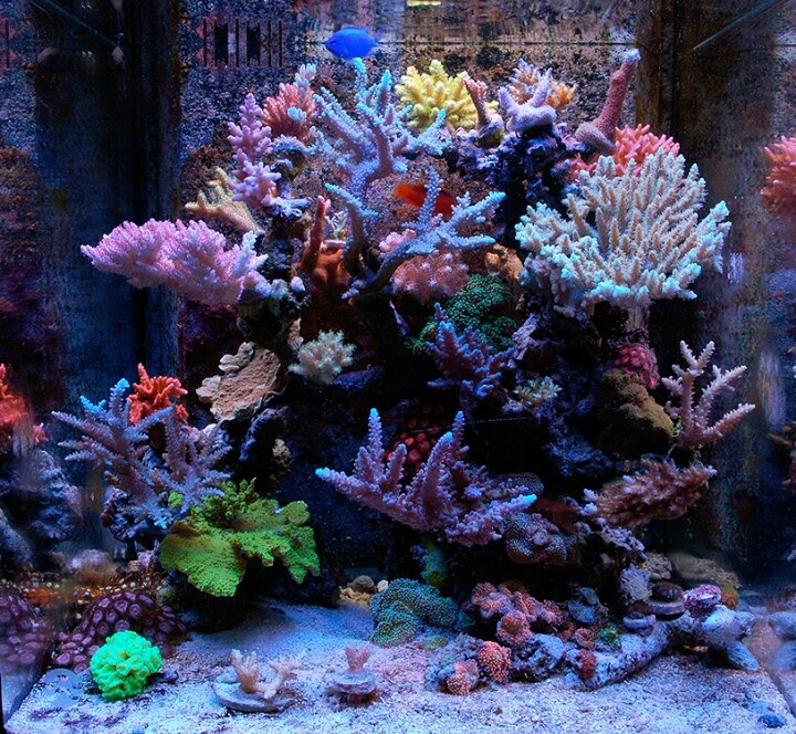 25 best ideas about reef aquascaping on pinterest reef for Aquarium nano marin