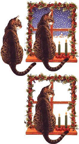 chat devant le miroir