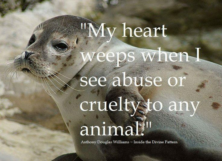 Animals Are Important To The World Quotes Google Search Adorable