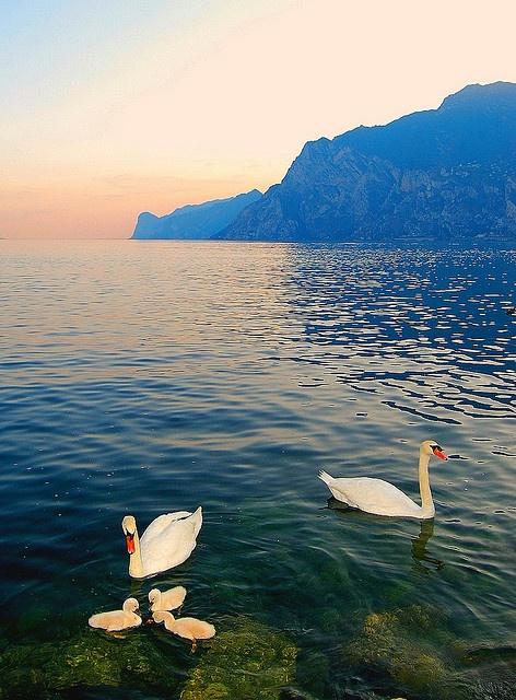 Lago di Garda, province of trentino, Trentino-Alto Adige, Italy