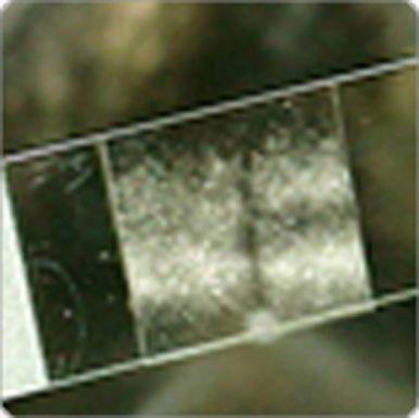 Microscope Slides, Cover Slips & Pippettes Price : AU$63.80 (inc GST) AU$58.00 (exc GST)
