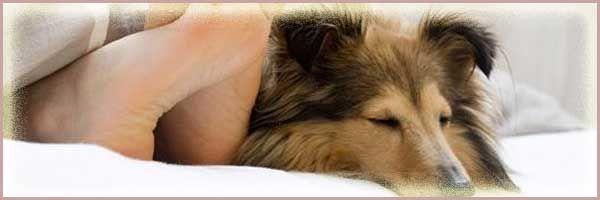 La mayoría de las personas que no pueden dormir bien de manera crónica no se diagnostican y no se tratan. El efecto más inmediato es sufrir somnolencia diurna, en ocasiones lo suficientemente grave como para interferir con las actividades diarias.