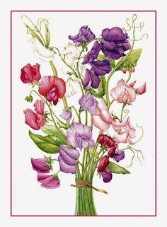 """Ervilha-de-cheiro – Lathyrus odoratus  <a href=""""http://sergiozeiger.tumblr.com/%E2%80%A6/ervilha-de-cheiro-lathyrus%E2%80%A6"""" rel=""""nofollow"""" target=""""_blank"""">sergiozeiger.tumb...</a>  A ervilha-de-cheiro é uma trepadeira anual de inverno.  Suas flores são muito vistosas, perfumadas, solitárias e podem ser de cores e matizes variados, com degradés e combinações entre o azul, branco, amarelo, laranja, rosa e vermelho."""
