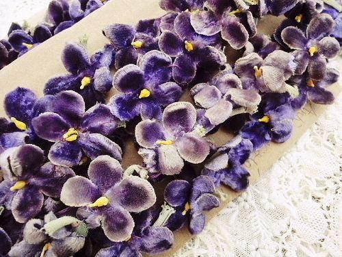 #velvet #violets