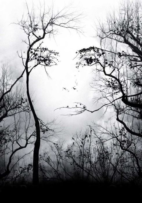 .: Picture, Faces, Beautiful, Art, Trees, Mother Nature, Photography, Optical Illusion