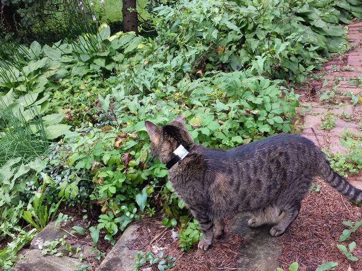 GPS Cat Tracker