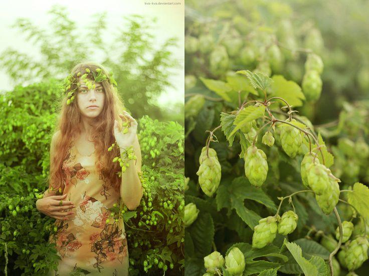 Botany series - Green - Humulus lupulus by Kva-Kva.deviantart.com on @DeviantArt