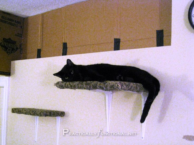 Carpet-Covered Cat Climbing Shelves! || Practically Functional