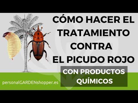 Explicación Mediante Vídeo Tutoriales De Cómo Hacer El Tratamiento Picudo Rojo En Palmeras En España Todos Los Detalles Y En 2020 Cómo Hacer Tutoriales Tratamientos