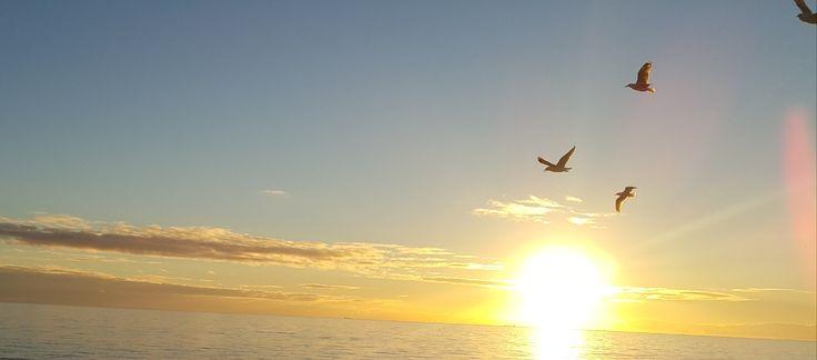 """Birds flock to witness a dramatic sundrop"" - LouLou Sunset @Henley Beach Adelaide South Australia #sunset #southaustralia #photography #gulls"