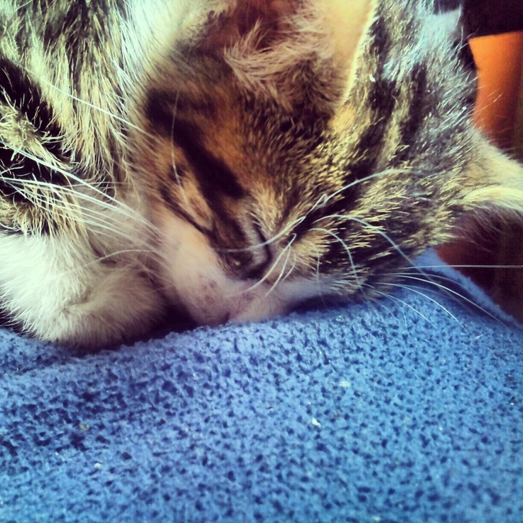 It's Amelia, my cat