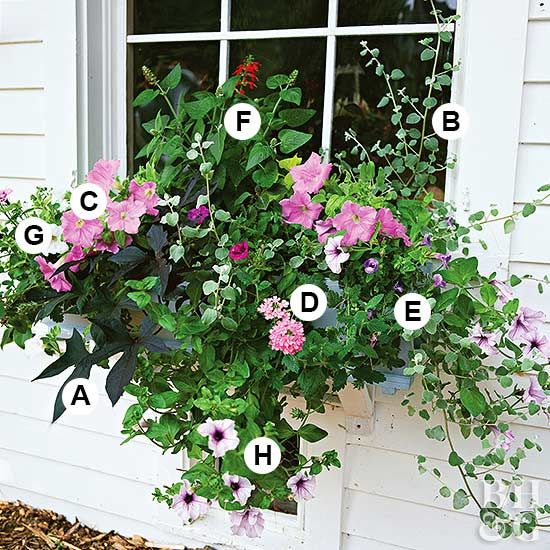Create a perfect container garden in a window box, planter or pot with our container garden recipes. We have ideas for sun, shade, attracting butterflies and more! Learn how to add flowers to any container garden for year-after-year beauty. #containergarden #gardening #perennials #flowers