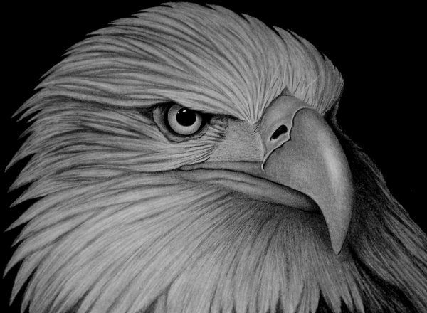 Black And White Pencil Drawings Of Animals