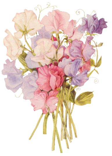 Marjolein Bastin - Sweet peas. I love MB I have 2 cupboards full of her prints and Hallmark line in my living room I call it my Natures Sketchbook room.