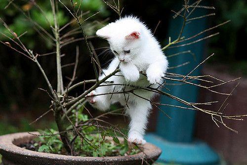 adventurous kitty: Cats, Animals, Pets, Trees, Adorable, Kittens, Kitties, Kitty, White Cat