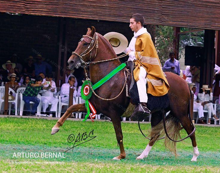 LXX Concurso Nacional del Caballo Peruano de Paso - 2015 CAMPEÓN DEL AÑO CAPÓN…