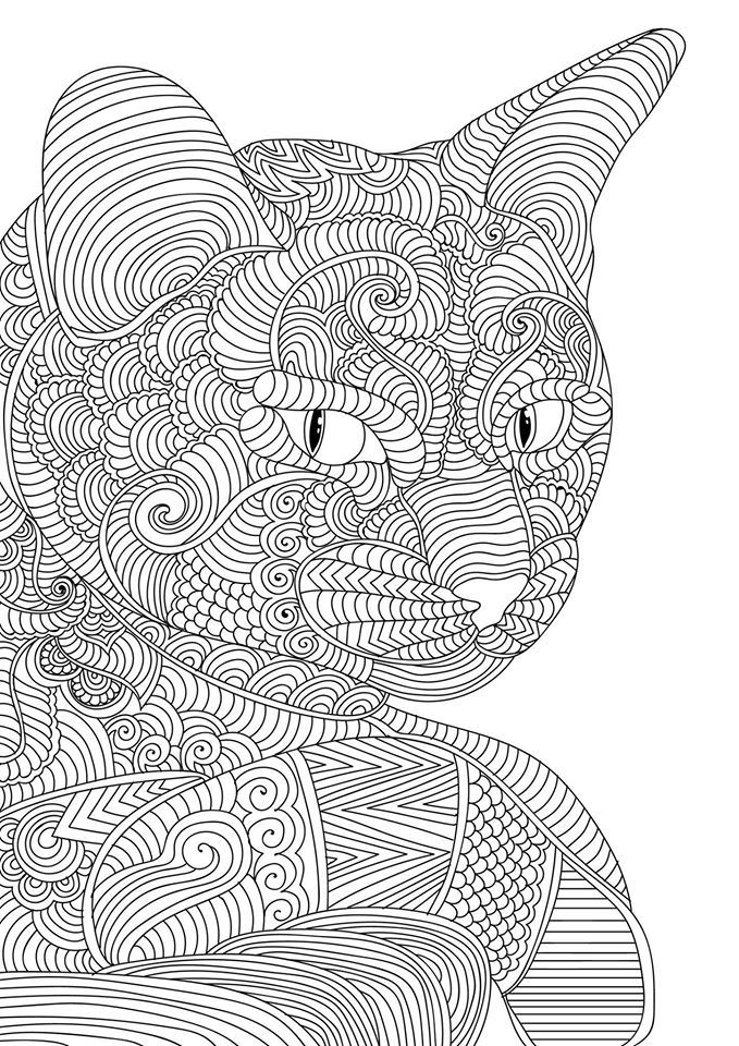 Cat Adult Colouring Page
