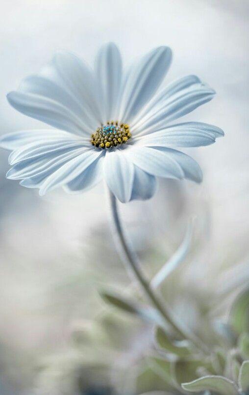 Birdenbire  Bir çiçek  Rıhtım taşının aralığından  Uzatmış başını  Bir çiçek yolumu kesti.. #cemalsüreya #sevdasözleri