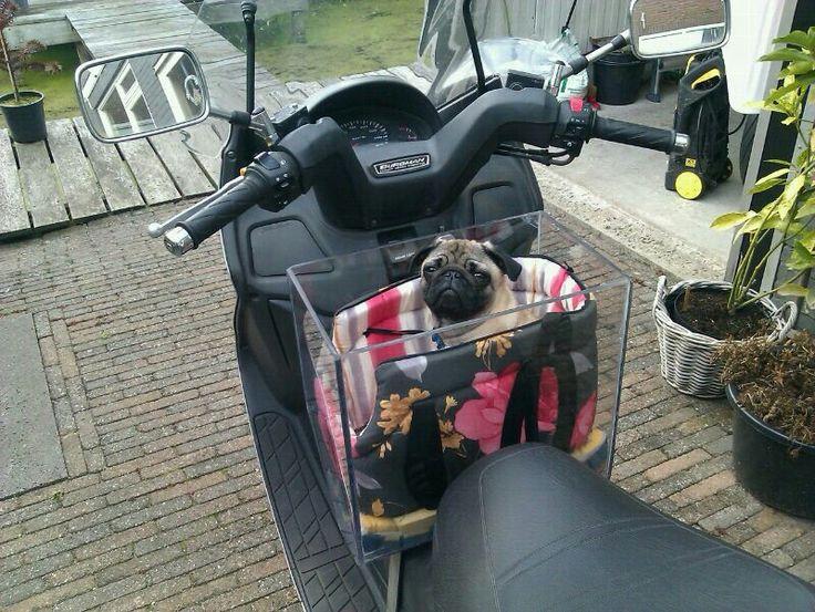 Mee op de scooter
