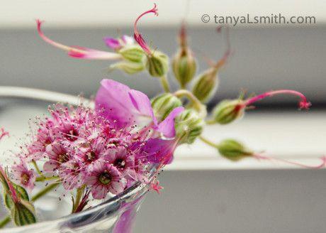 fine art Photography. wildflowers. pink fairy flowers