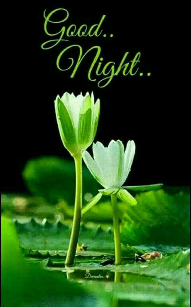Pin By Bali Shah On Good Night Pinterest Night Quotes Gud Night