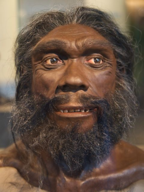 Homo heidelbergensis (also Homo rhodesiensis) is an extinct species of the genus Homo which lived in Africa, Europe and western Asia from at least 600,000 years ago. It survived until about 200,000 to 250,000 years ago. Its brain was nearly as large as that of a modern Homo sapiens. It is very likely the direct ancestor of Homo sapiens (Africa) and the Neanderthals (Europe), and perhaps also the Denisovans (Central Asia). First discovered near Heidelberg in Germany in 1907.