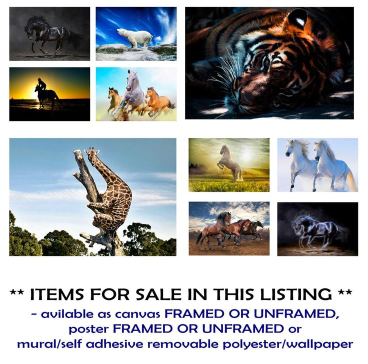 Details about  BLACK HORSE, WHITE, TIGER, WILD CANVAS PRINT, POSTER FRAMED/UNFRAMED/ADHESIVE