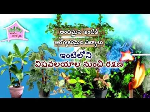 Vantinti Chitkalu: విషవలయాల నుంచి రక్షణ I Reduce Toxins in Homes I Si...