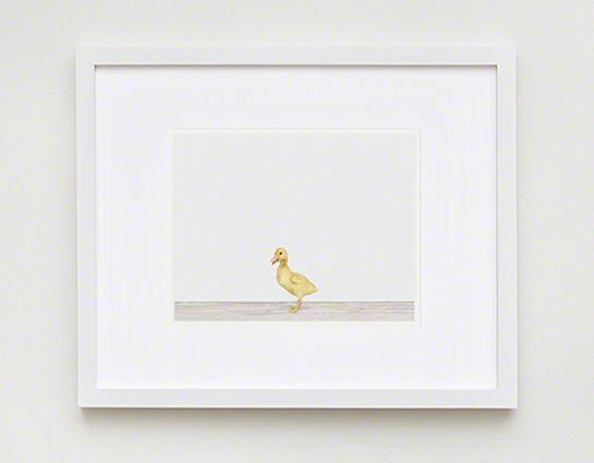 baby duck! 11 X17