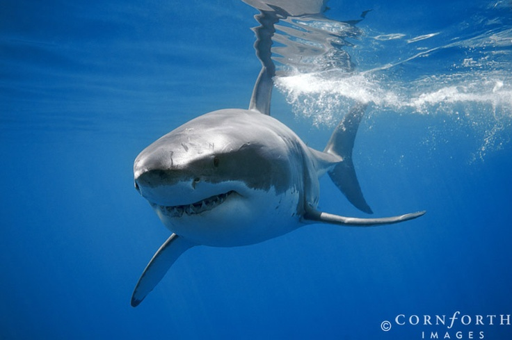Explore The Beauty Of Caribbean: Best 25+ Guadalupe Island Ideas On Pinterest