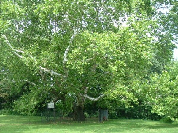 Tree barks and leaves | Weavolution