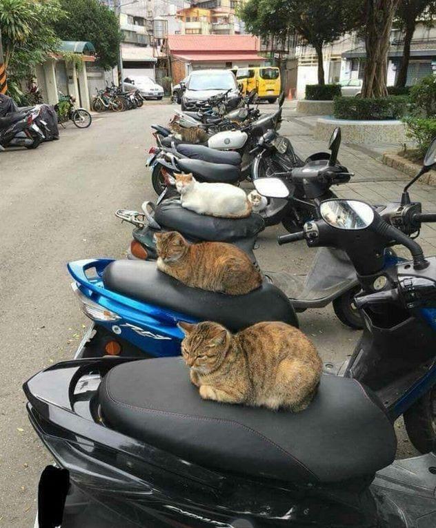 20 witzige Momente mit Katzen.