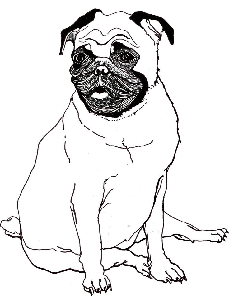 pug dog cartoon draw online x these are searching code pug pals pug shows which