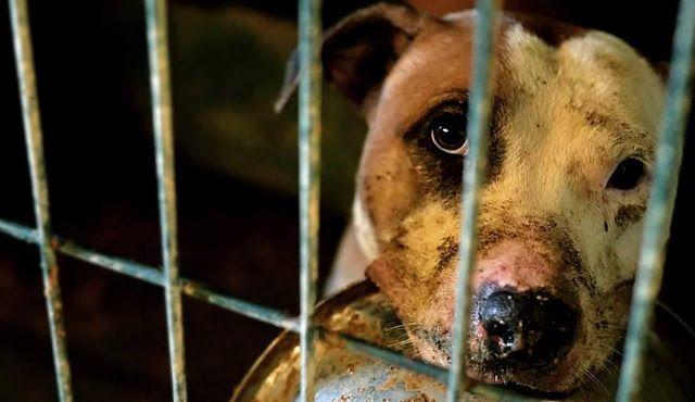 Uma mensagem para quem abandona os seus melhores amigos http://palavrasdoabismo.blogspot.pt/2016/12/uma-mensagem-para-quem-abandona-os-seus.html #animais #abandono #nãocompreadopte